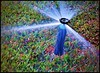 Mayim chaim! - - Water is life! (Mike Goldberg) Tags: sprinkler ground jerusalemvicinity canong16 effects mikegoldberg hss water