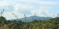 .it's so important that you get the message (irvingherrera5) Tags: mountains virginia blueridgemountains roanoke shrub justinbeiber montanas