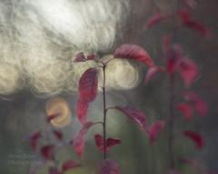 A la fin de journe  (At day's end) (l'imagerie potique) Tags: limageriepotique poeticimagery helios446 soapbubblebokeh bokehbulledesavon goldenhour autumn lheure dore