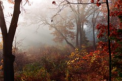 Autumn Morning - Film (Trish P. - K1000 Gal) Tags: film canoneosrebelk2 35mm fujihq iso100 canon eos rebel k2 sunlight fog morning autumn michigan brighton garden trees hickory oak leaves primelens 50mm slr sunbeams