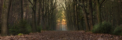 In the woods (jan.arnds) Tags: lastlights light sun sunset forrest mood winter cold trees leaves shine nature outdoor evening wald laub landscape landschaft