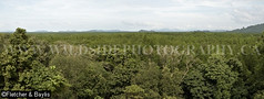 39995 Panoramic overview of the mangrove forest from the viewpoint at the Mangrove Forest Research Centre, Ranong Biosphere Reserve, Ranong, Thailand. (K Fletcher & D Baylis) Tags: panorama plant vegetation flora tree mangrove mangrovetree mangroveforest swamp mangroveswamp mangroveforestresearchcentre biospherereserve ranongbiospherereserve ranong thailand southeastasia november2016
