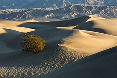 Mesquite Sunrise (Laura Zirino) Tags: southwest sand dunes mesquitedunes sunrise dailynaturetnc16 deathvalley nationalparks landscapes landscape light ca california