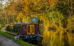 Guard Dogs (williamrandle) Tags: goldenlight stourport kidderminster staffordshireworcestershirecanal waterways towpath worcestershire uk england winter 2016 ouitdoor landscape water reflections narrowboat dogs guarddogs nikon d7100 tamron2470f28vc outdoor serene