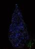 Tree Lights, Towell House, Belfast (John D McDonald) Tags: towellhouse towellhouseresidentialhome residentialhome oldpeopleshome oldfolkshome a55 knockroad knockroadbelfast kingsroad kingsroadbelfast outerring belfastouterring knock belfast eastbelfast tree trees light lights illumination illuminations illuminated treelights illuminatedtree illuminatedtrees geotagged longesposure slowshutter neutraldensity neutraldensityfilter nd prond200
