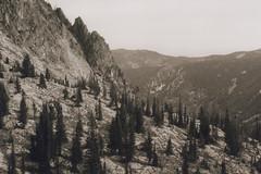 Francis Bowman Trail 13, Eagle Cap Wilderness 2016 (Sara J. Lynch) Tags: sara j lynch eagle cap wilderness wallowas eastern oregon francis bowman trail asahi pentax k1000 35mm film mountains trees