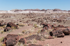 Long Logs Trail (sgplewka) Tags: 2016 usa petrifiedforestnp holbrook arizona us
