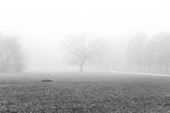 Misty Warsaw // 2016 (Jordi NN) Tags: jordi nn 2016 misty fog warsaw poland black white bw park city