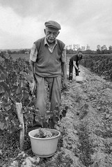 MINOLTA AF 7000 28.105 ILFORD HP5 LC29 (Leinik) Tags: minolta af 7000 28105 ilford hp5 lc29 vendange vigne travail paysan agriculteur