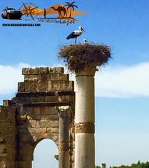 Volubilis ,Meknes (www.marrakechviajes.com) Tags: merzouga marruecos viajes rutas todoterreno marrakech aventuras travels tours morocco 5days 3daysmarrakech from fes casablanca chefchaouen tanger agadir desert comeltrekking