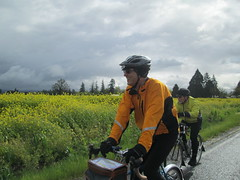 Riding by the mustard (Lynne Fitz) Tags: bicycle oregon permanent populaire randonneur randonneuring