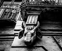 The Bull is Tied (Rebel Yell 82nd) Tags: street blackandwhite italy buildings torino photography nikon italia bull piemonte turin toro biancoenero d7000 sigma1835art