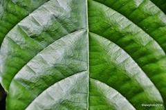 Green Amazon (L▲iv ©) Tags: verde green brasil amazon nikon manaus brasile amazonas 2014 amazzonia laivphoto