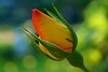 PETALES ET COULEURS (Gilles Poyet photographies) Tags: fleur rose soe auvergne clermontferrand autofocus aplusphoto artofimages rememberthatmomentlevel1 rememberthatmomentlevel2 rememberthatmomentlevel3 jardinlecocq