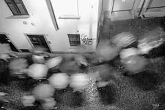Road in Lecco (Tobia Scandolara) Tags: tobia scandolara tobiascandolara lecco piove pioggia raining estate2014 processione ombrelli ombrello umbrella acqua sera evening water life twittertuesday rain seebw blackandwhite monochrome
