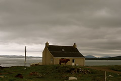 isle of berneray,outer hebrides (plot19) Tags: uk greatbritain sea house mountains west island photography scotland cow nikon northwest britain north western loch outer northern isle isles hebrides plot19