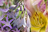 From the Garden (sminky_pinky100 (In and Out)) Tags: flowers stilllife canada nature floral garden pretty novascotia layers colourful mygarden fantasticflower omot cans2s flickrsfantasticflowers floralmontage thenewmasterclass