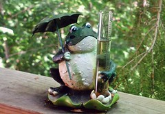 Rain Forecaster (ikan1711) Tags: trees greenleaves art rain spring rainyday montreal balcony frog raindrops balconies greenery treebranches stormyweather frogfigurine summerweather artobjects weatherforecaster springweather dollarddesormeauxqc rainforecaster giftsfromnature montrealsuburbs
