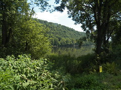The Delaware near Tinicum (MissyPenny) Tags: trees summer water river summertime buckscounty delawareriver southeasternpa