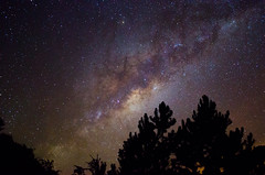 Estrelas e Pinheiros (8) (Calebe Mendes) Tags: estrelas cu noite longaexposio vialactea