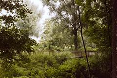 Welcome To The Jungle... (Minolta X300s, Agfa Vista 400 exp. 2008) (baumbaTz) Tags: bridge trees tree green germany deutschland nikon minolta iso400 atl vista grün agfa brücke coolscan bäume baum x300 stade 2200 expiredfilm 2014 agfavista400 niedersachsen lowersaxony c41 jobo harsefeld minoltax300s autolab tetenal colortec 4000ed x300s klosterpark