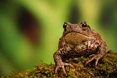 Common Toad. (Yvette-) Tags: knowsleysafaripark nikkorf28105mm nikond5100