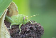 senza titolo (Macthia) Tags: red macro green eye canon drops flickr rugiada goccie flickraward canonef100mmf28lmacroisusm canoneos600d macthia