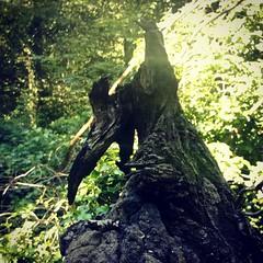 (Daniel James Greenwood) Tags: phonephoto nokialumia