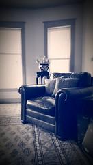 Blue & White (Kenneth Wesley Earley) Tags: pakistan leather mobile sepia butterfly chair spokane bernhardt livingroom mobilephonecamera blueandwhite spokanewa upholstery leatherchair bokhara handmaderug 99205 bernhardtfurniture htconem8 spokanewa99205 blueandwhitesepia