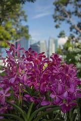 Singapore Garden Festival 2014 @ Gardens by the Bay (gintks) Tags: flower singapore orchids meadow floraldisplay flowerdome gardensbythebay singaporetourismboard nparksbuzz sgf2014 gintaygintks