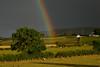 No pot of Gold ! (Longreach - Jonathan McDonnell) Tags: ireland tree rain clouds rainbow northernireland codown justclouds dsc0530