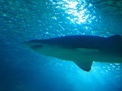 Valencia Aquarium and Marine Park, Spain (ChihPing) Tags: ocean park travel blue valencia aquarium spain marine olympus f18 45mm omd  oceanografic     loceanogrfic oceanogrfic em5