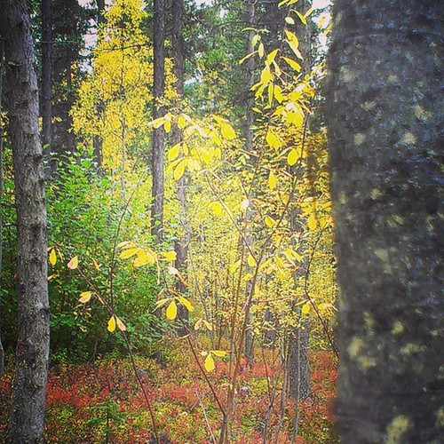 .#fall colour #yxy #Yukon