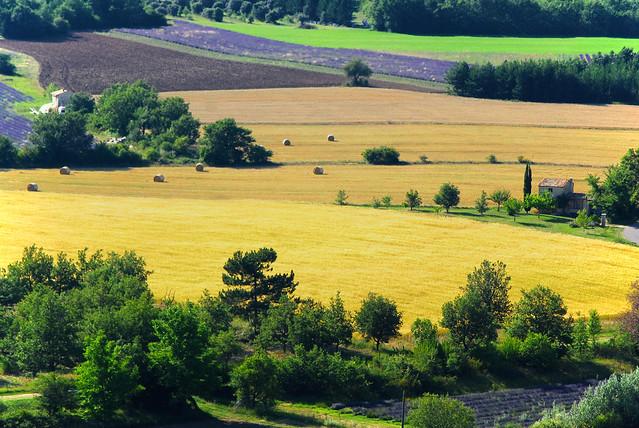 summer lavender provence lavande sault vaucluse aurel