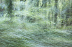 Moving through the woods (Keartona) Tags: trees blur green woodland movement woods greenery icm swishy intentionalcameramovement