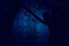 3893 (jsolaris) Tags: blue tree night zoo darkness forrest frankfurt owl darkblue
