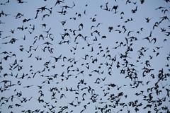 the flight (Claudia Spunticchia) Tags: sky rome bird birds fly fear flight swing uccelli volo cielo ansia angoscia