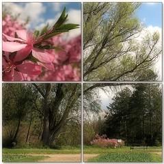 Spring Air (Tlgyesi Kata) Tags: spring mosaic botanicalgarden mozaik vcrtt botanikuskert vcrttibotanikuskert withcanonpowershota620 nemzetibotanikuskert