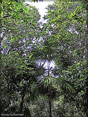 3211935046_18939064d9_o (gray.florie) Tags: allrightsreserved usewithoutpermissionisillegal ©2009florencetomasulogray florencegray floriegrayflorencetomasulograytomasulofloriegrayfloriegraycom