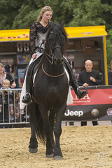2014.09.13 - Feria Andalucia D'Oupeye (NosChevaux.com) Tags: horses horse cheval feria andalucia frise chevaux paard paarden 2014 friesian frison friesianhorse oupeye doupeye chevalchevauxhorsehorsesfriaoupeyeferia 2014frisonfriesianfrisepaardpaarden feriaoupeye
