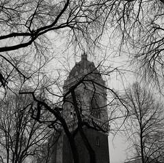Portland (austin granger) Tags: tree tower film church square portland branches layers fractals scribble dendrites gf670 austingranger