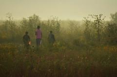 Into The Fog (Jayhawk Explorer) Tags: light fog lawrence university ks butterflies ku kansas wildflowers monarchs universityofkansas douglascounty earlymorninglight bakerwetlands monarchwatch ipiccy monarchtaggingevent