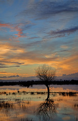 Somerset Levels (CliveDodd) Tags: somerset moor levels floods tealham