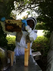 WARRE HIVE INSPECTION