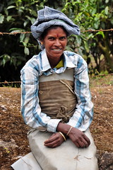 India - Kerala - Munnar - Tea Plucker - 12 (asienman) Tags: india mountains kerala hills teafactory teaplantation munnar teapicker asienmanphotography teaplantagens