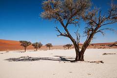 namibia2015-87 (yriis) Tags: namib desert sand immensity uninhabited wildness dune travel 45 red sky blue africa namibia kalahari