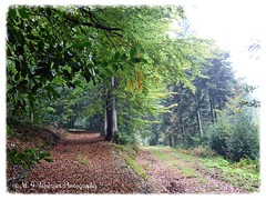 Autumn 04 (M.J.Woerner) Tags: forest autumn wood foliage leaves woods october timber fog november mist walk haze wald stroll laub herbstlaub nebel dunst autumnforest fallfoliage fallleaves herbstwald autumnfoliage forst spaziergang rainyday fallwoods rainydays
