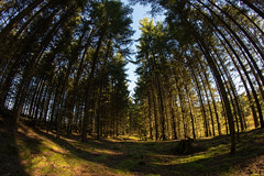 birkes057 (Henrik DK-Photo) Tags: challengeyouwinner woods samyang8mmf35 fisheye friendlychallenges