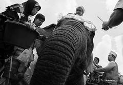 IMG_1616 (winai_madaree) Tags: culture melayu elephant folk deep south thailand narathiwat asian asia
