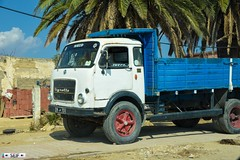 OM Tigrotto Tunisia 2016 (seifracing) Tags: iveco tigrotto tunisia 2016 seifracing spotting security rescue recovery transport traffic tunisie tunis taxi tunesien tunisian emergency research german